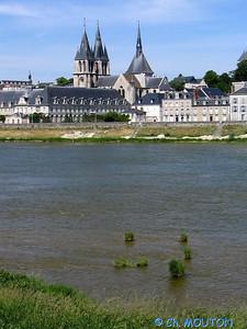 Blois 019 C-Mouton