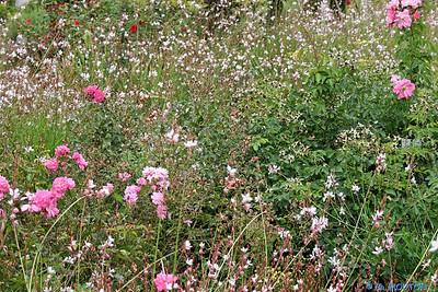 Jardin des plantes 4 C-Mouton