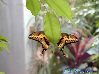 Orleans Serre aux papillons 07 C-Mouton