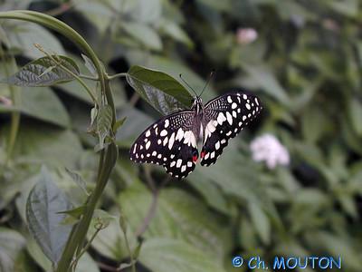 Orleans Serre aux papillons 09 C-Mouton