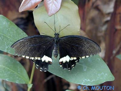 Orleans Serre aux papillons 05 C-Mouton