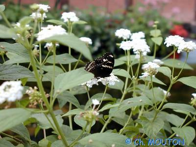 Orleans Serre aux papillons 01 C-Mouton