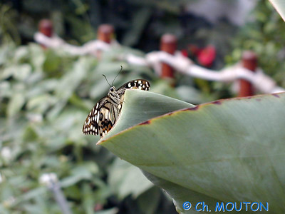 Orleans Serre aux papillons 04 C-Mouton