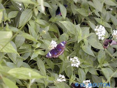 Orleans Serre aux papillons 18 C-Mouton