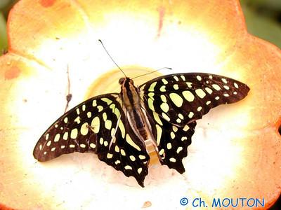 Orleans Serre aux papillons 08 C-Mouton