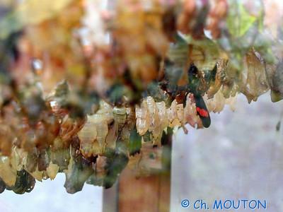 Orleans Serre aux papillons 03 C-Mouton