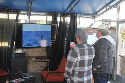 CBYC Whale Watching Cruise 2018
