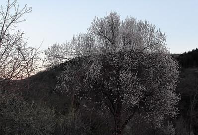 11.03.2017 - CESENA - PADERNO - PRIMAVERA-016
