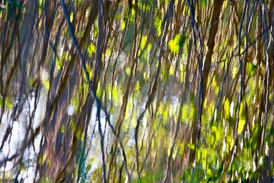 """Reflection."" Tree Tops Park, Davie, Fla., November 2015."