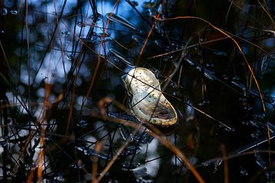 Secret Woods Nature Preserve, Dania, Fla., Oct. 31, 2015