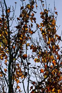 Tree Tops Park, Davie, Fla., November 2015.