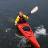 Beluga under kayak.