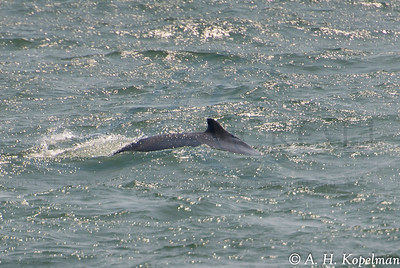 Right side of the dorsal fin