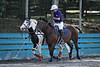 If have a fabulous pony like Spook, you can take a break and Spook will play polo without you!