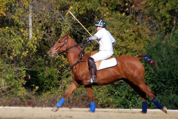 Chukkar Farm Polo - November 7, 2011 091