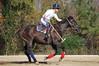 Chukkar Farm Polo - November 7, 2011 098