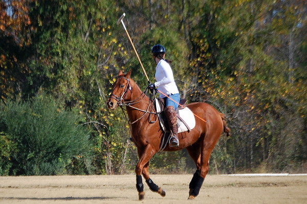 Chukkar Farm Polo - November 7, 2011 027