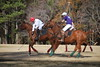 Chukkar Farm Polo - November 7, 2011 058