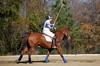 Chukkar Farm Polo - November 7, 2011 100