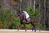 Chukkar Farm Polo - November 7, 2011 090