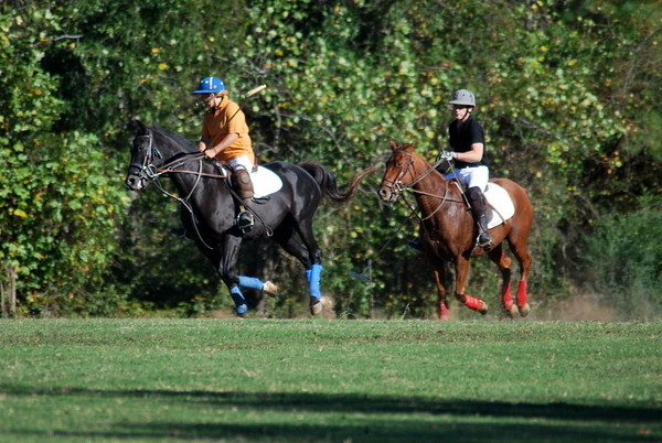 Chukkar Farm Polo - Polo for Parkinson's - October 16, 2011 420