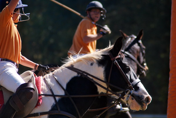 Chukkar Farm Polo - Polo for Parkinson's - October 16, 2011 352