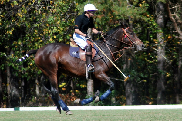 Chukkar Farm Polo - Polo for Parkinson's - October 16, 2011 278