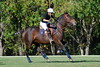 Chukkar Farm Polo - Polo for Parkinson's - October 16, 2011 431