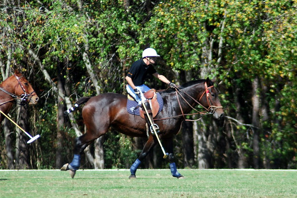 Chukkar Farm Polo - Polo for Parkinson's - October 16, 2011 277