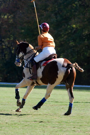 Chukkar Farm Polo - Polo for Parkinson's - October 16, 2011 404