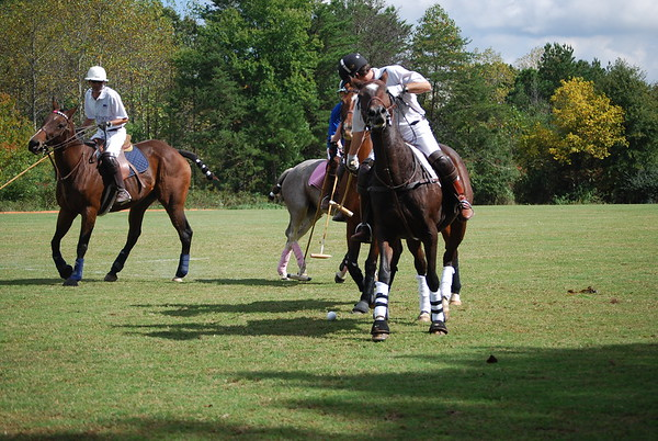Polo for Parkinsons 262