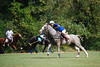 Polo for Parkinsons 280