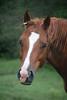 Halle Berry  - The Horses and Ponies of Chukkar Farm
