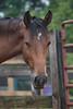 Vala  - The Horses and Ponies of Chukkar Farm