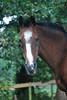 Big Jake  - The Horses and Ponies of Chukkar Farm