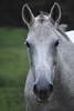 Monuita  - The Horses and Ponies of Chukkar Farm