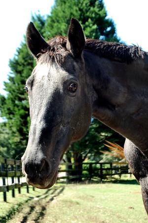 Teka  - The Horses and Ponies of Chukkar Farm