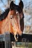 Evidence  - The Horses and Ponies of Chukkar Farm