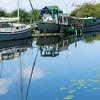Chafford Hundred Photography Club June 17 – Morning walk at Daisy Meadow, Canal Bank, Heybridge Basin, Maldon, Essex CM9 4RR