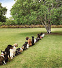 Dogs Lined Up For Tree