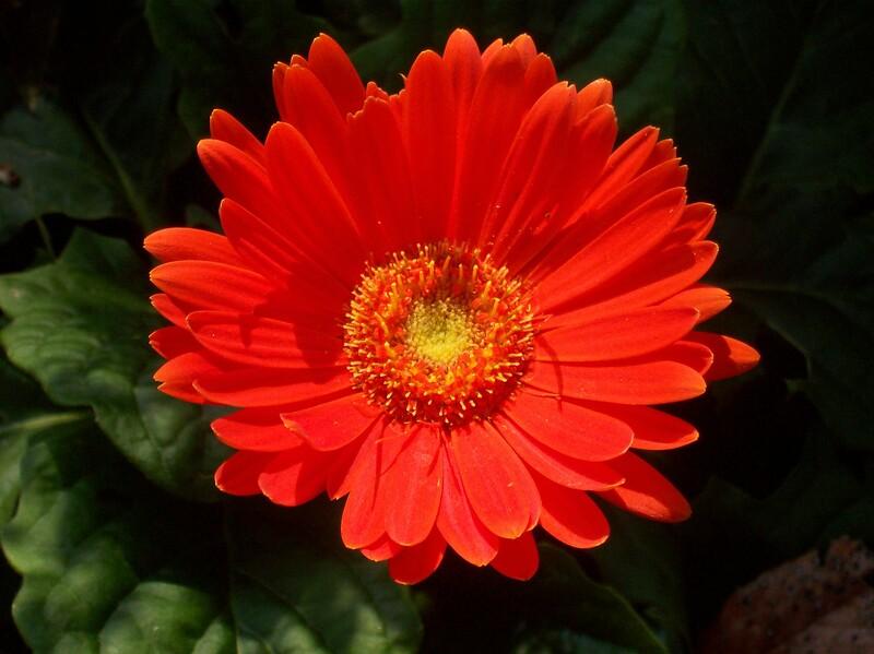 Fall Orange Bloom