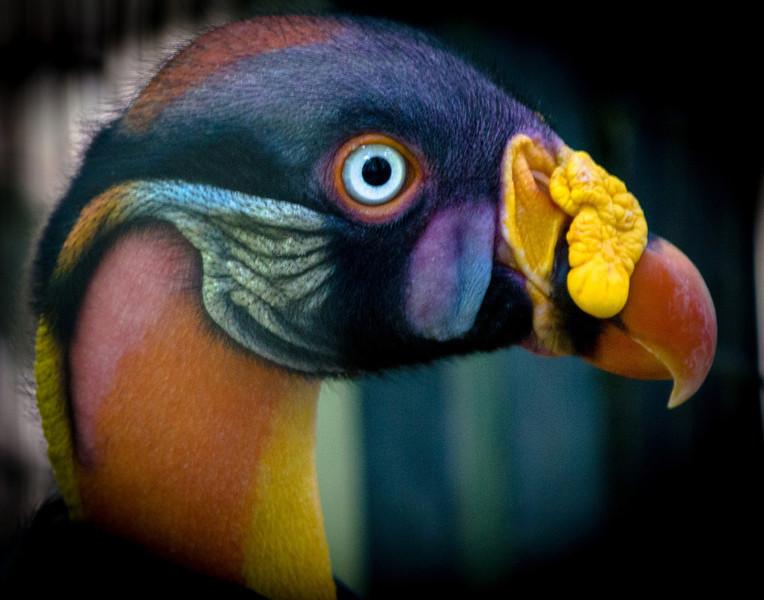 Bird's Eye 'O'