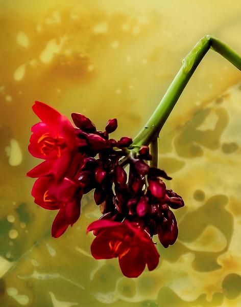 Broken Flower 3