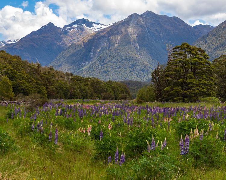 Wildflower Meadow in New Zealand