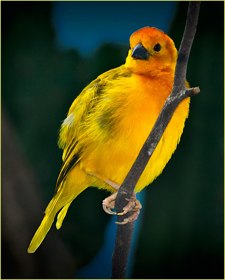 """ Yellow Bird """