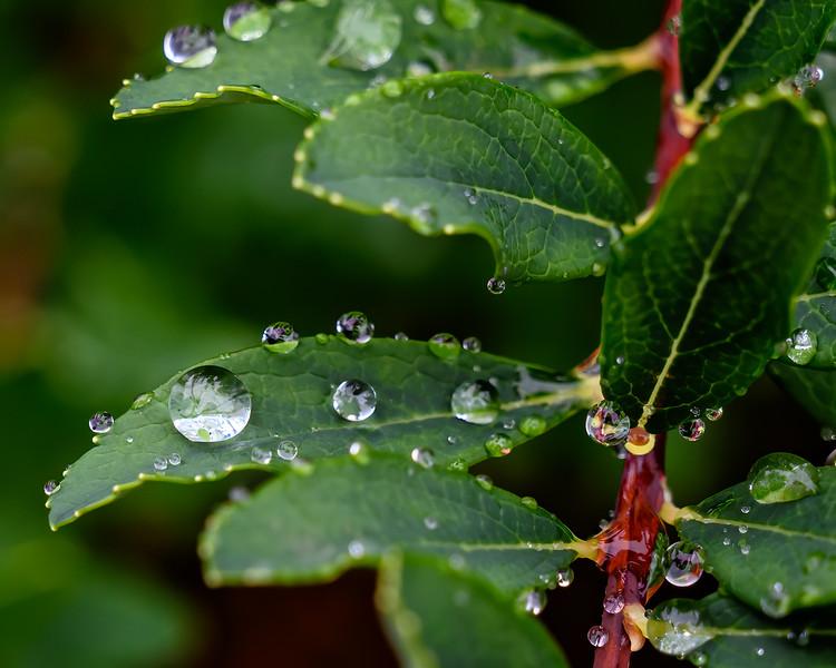 Raindrops Keep  Falling.......