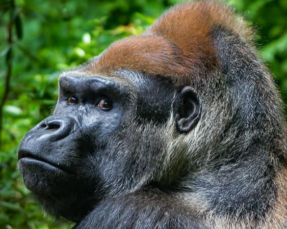 Challenge #100 - Zoo Animals