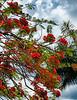 Flamboyant Ibis
