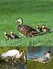 Ibis Wildlife