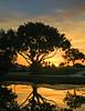 Dawn at Ibis